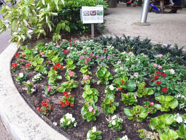 あかつき公園花壇