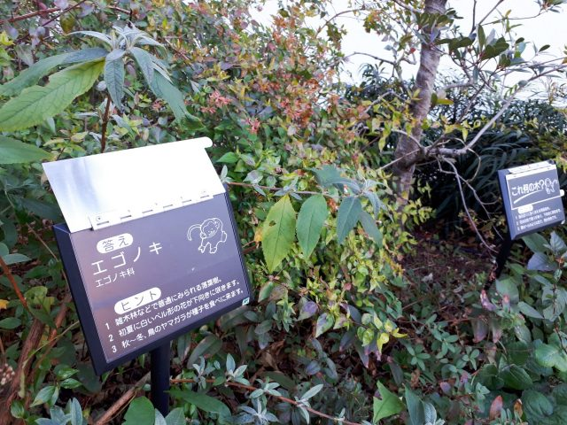 水谷橋公園_植物