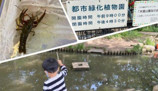 木場公園|都心でザリガニ釣りが楽しめる!穴場スポット「都市緑化植物園」