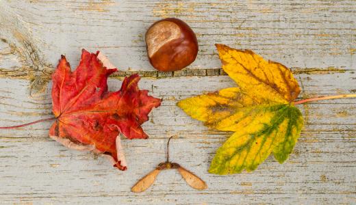 コラム|思わず訪れたくなる!秋のお出掛けにも最適な紅葉スポット